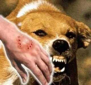 狗狗为什么会一直咬人 怎么判断狗会不会咬人