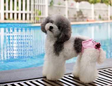 狗狗穿生理裤好不好 狗狗生理裤怎么做